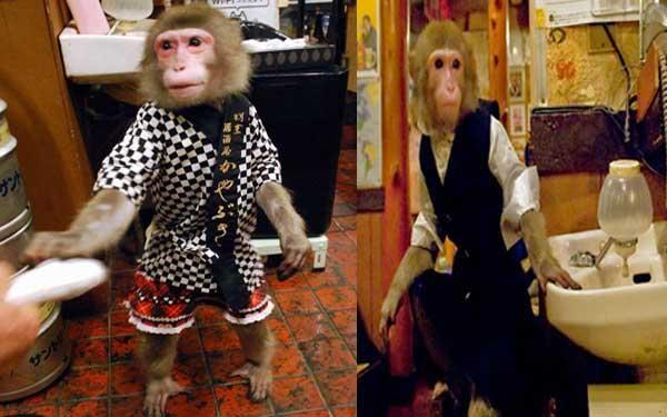 A restaurante in tokiyo where monkey play role of waiter