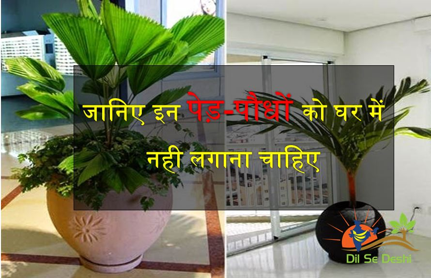 plants-and-trees-for-prosperity