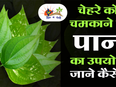 benefits of paan leaves