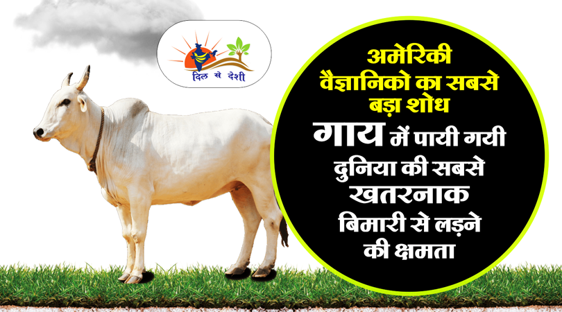 research on cow about hiv aids1
