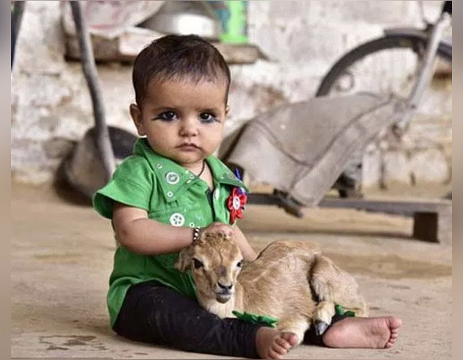 bishnoi-tribe-women-breastfeed-deer-like-mother