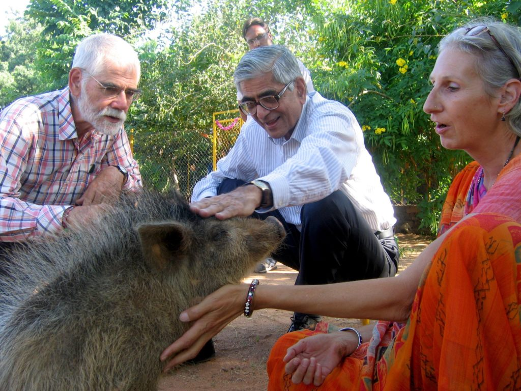 seattle family moved to india to rescue animals