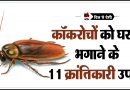 Cockroach Bhagane ke Desi Upay in Hindi