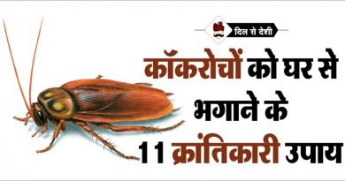 Cockroach-Bhagane-ke-Desi-Upay-in-Hindi-800x445