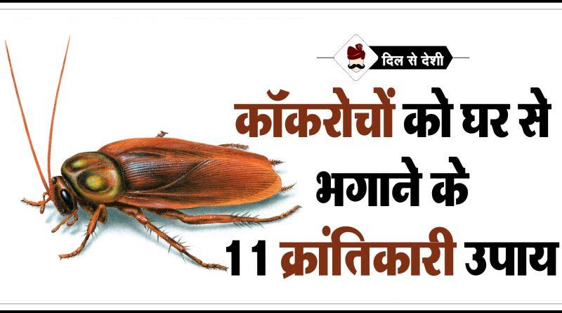 Cockroach Bhagane ke Desi Upay in Hindi
