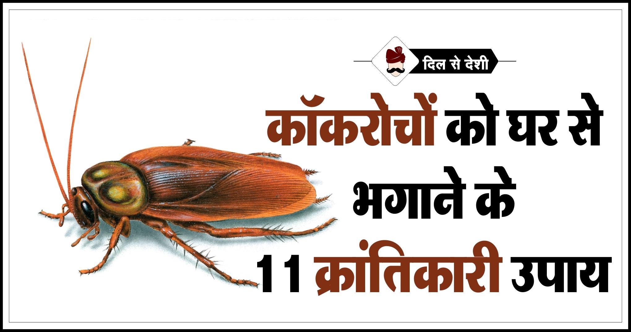 कॉकरोच से छुटकारा पाने के 11 देसी नुस्खे | Cockroach Bhagane ke Gharelu Upay in Hindi