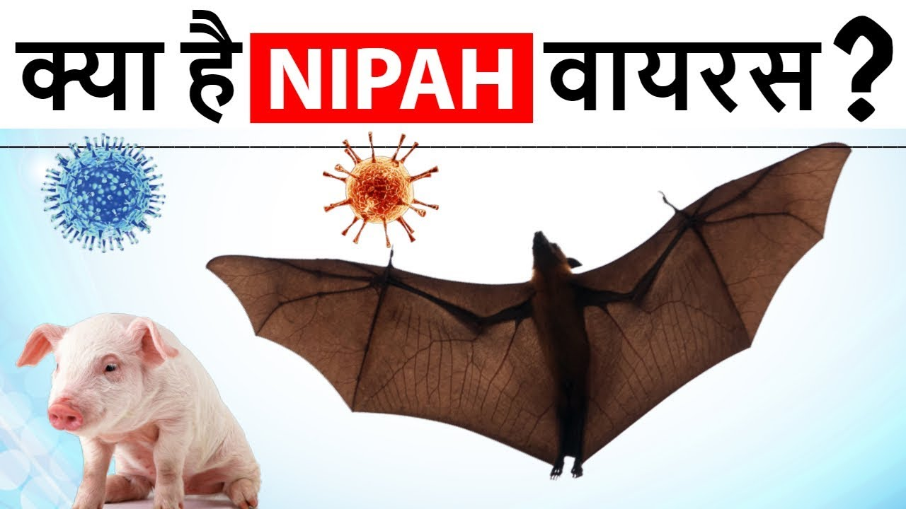 nipah virus in hindi