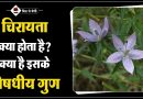Chirayata Features and Benefits in Hindi