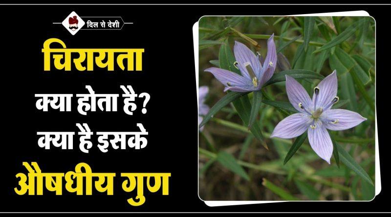 Chirayata Features and Benefits in Hindi