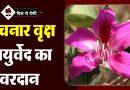 Kachnar Ke Fayade in Hindi