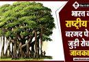 Banyan - National Tree of India in hindi