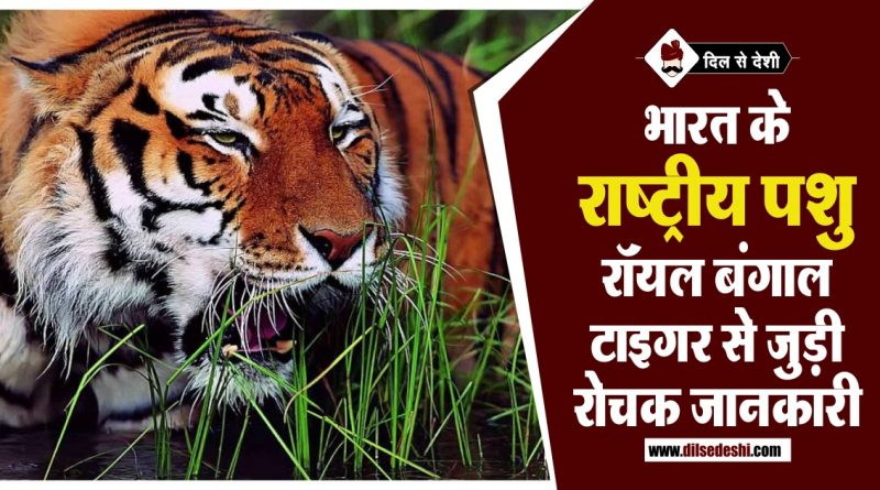 Full Details About Bengal Tiger in Hindi