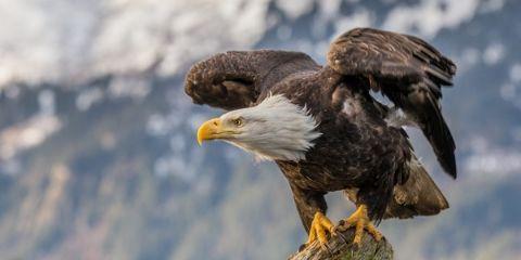 Eagle Bird Name in Hindi and English