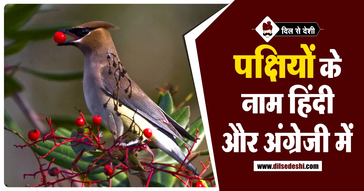 20 पक ष य क न म अ ग र ज और स स क त म Birds Name In English And Sanskrit